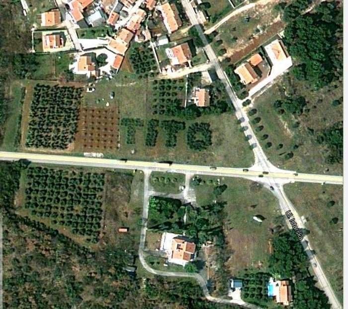 Oliveto visto dall'alto, con effetto sorpresa