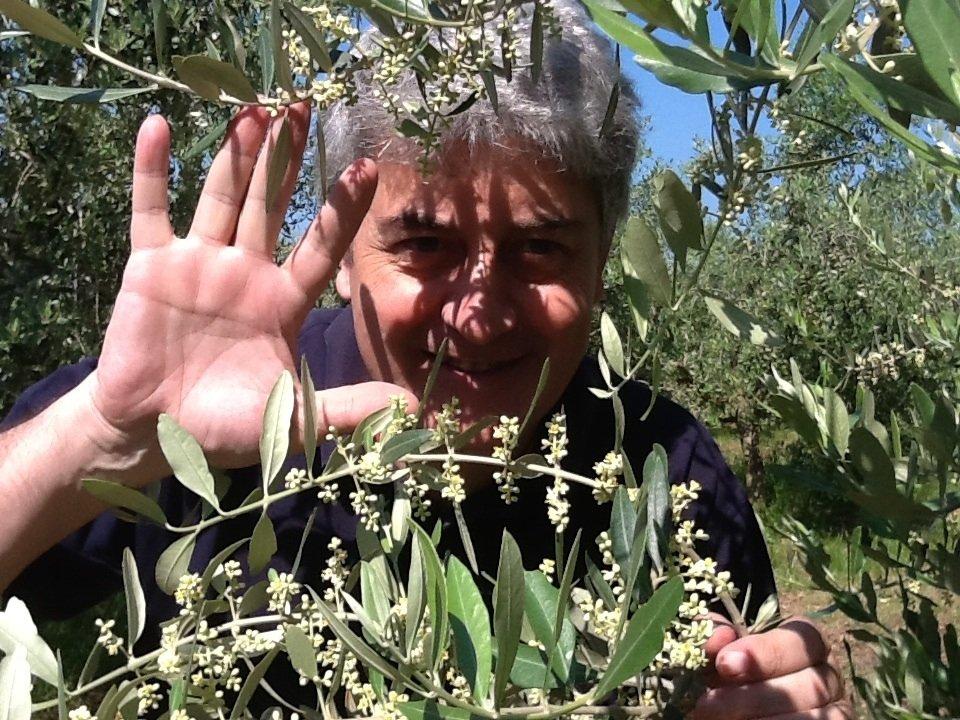 Un'estate senza l'urlo degli olivi per la grande sete