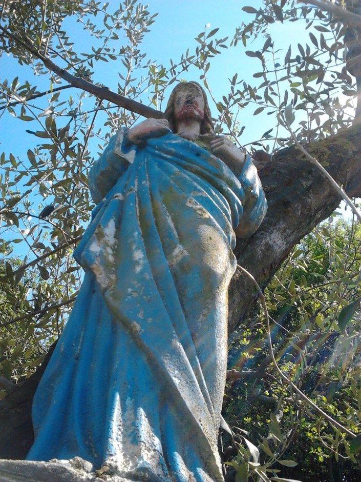 Lo sguardo benedicente tra gli olivi