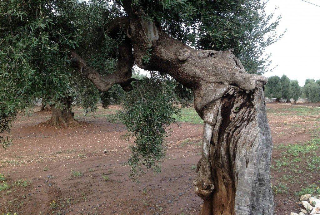 Piantare alberi è mettere radici nel futuro
