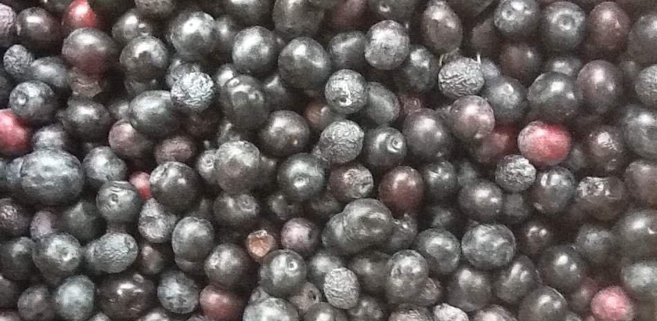 Suggerimenti per gustare tutta la bontà delle olive Nolca