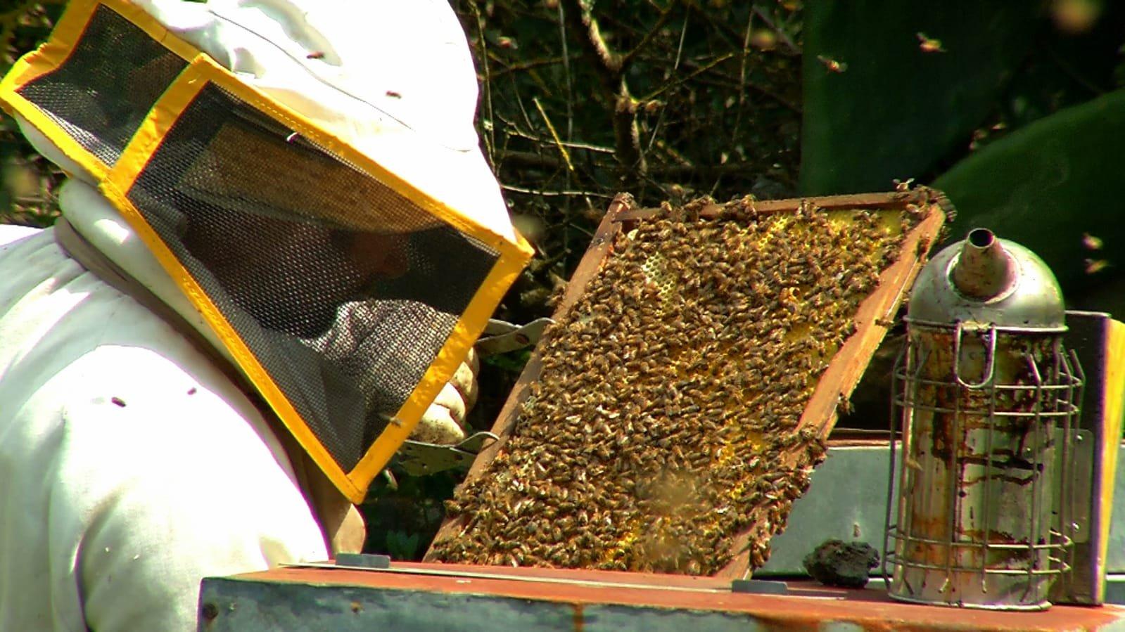 Denny Almanza, il guardiano delle api