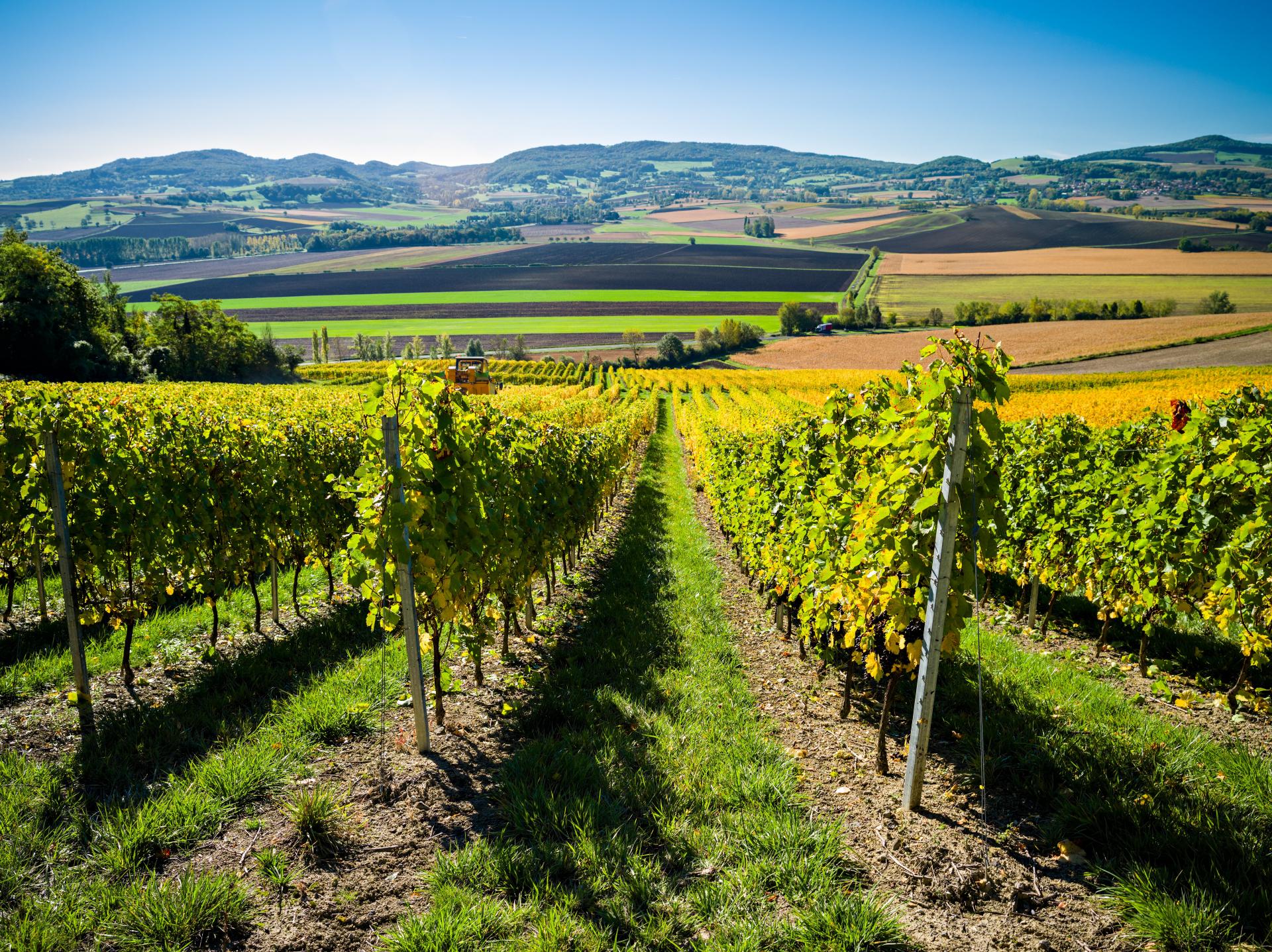 Il fenomeno dei vini vulcanici