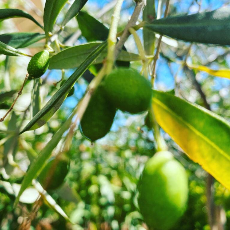Gli agricoltori non avvelenano la collettività e l'ambiente