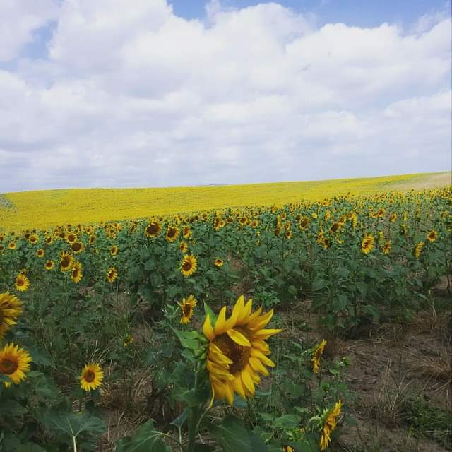 Il settore olio da seme soffre il calo dei consumi e le incerte prospettive di mercato