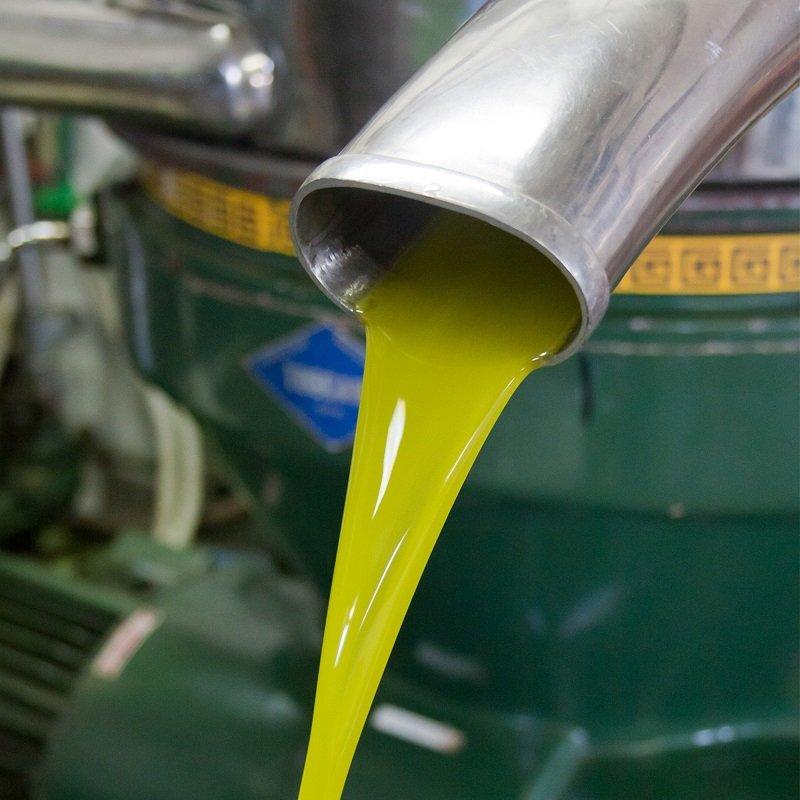 Lo stato del comparto oleario italiano aggiornato al 14 ottobre