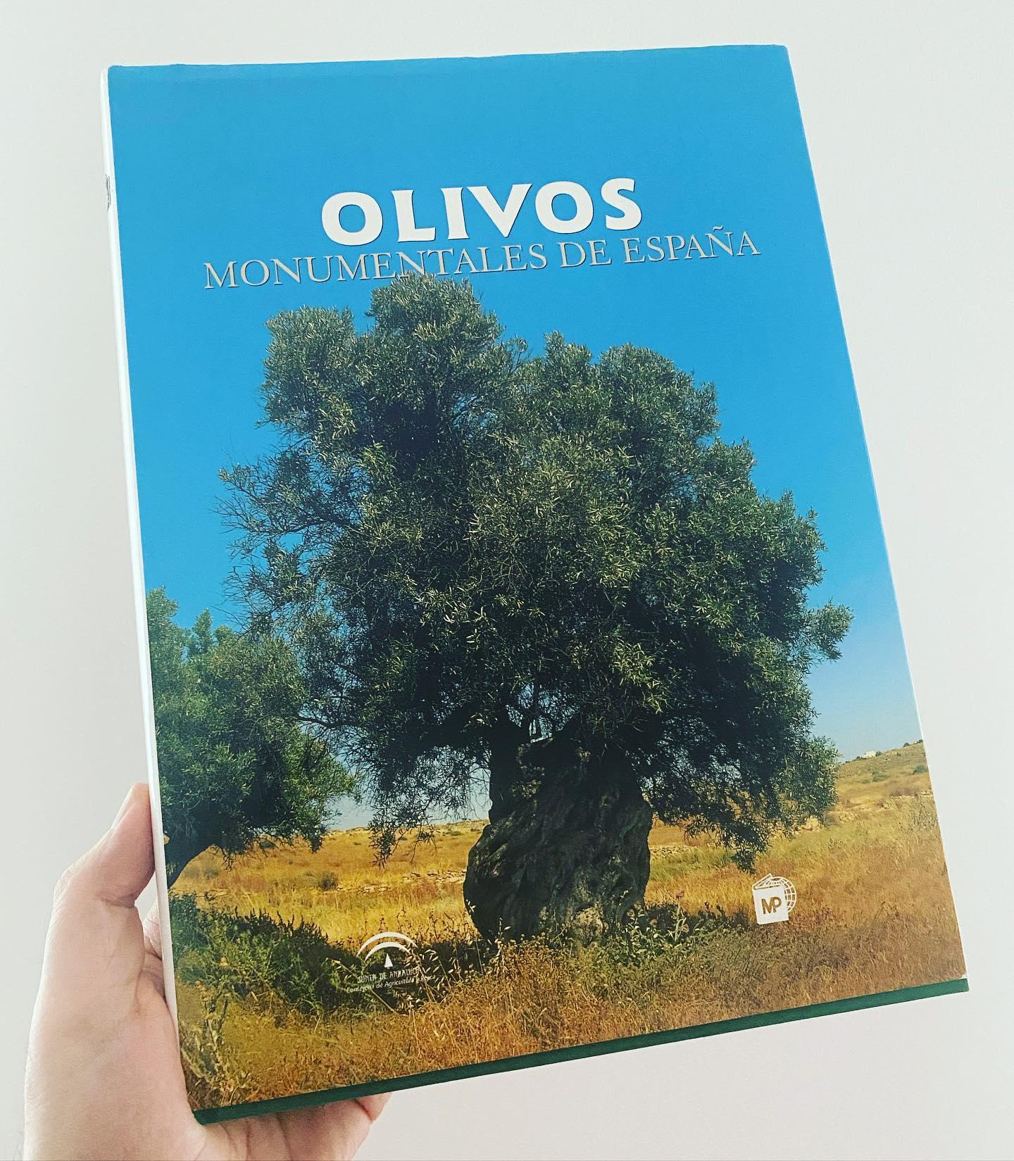 In Spagna ci sono olivi monumentali magnifici