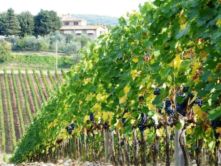 La sfida dei sistemi di viticoltura intensiva