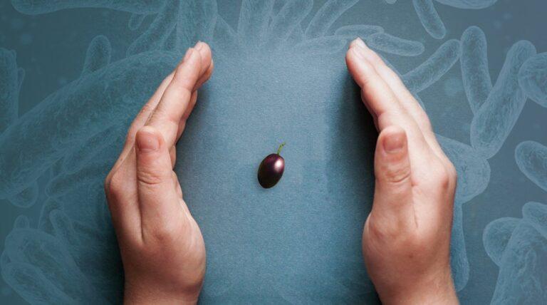 Siete a conoscenza del biofilm microbico sulle salamoie delle olive da mensa?