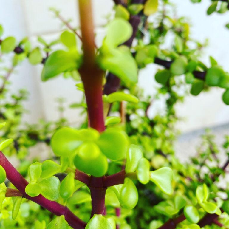 """Per la protezione della piante ora entra in campo un """"medico"""" speciale"""