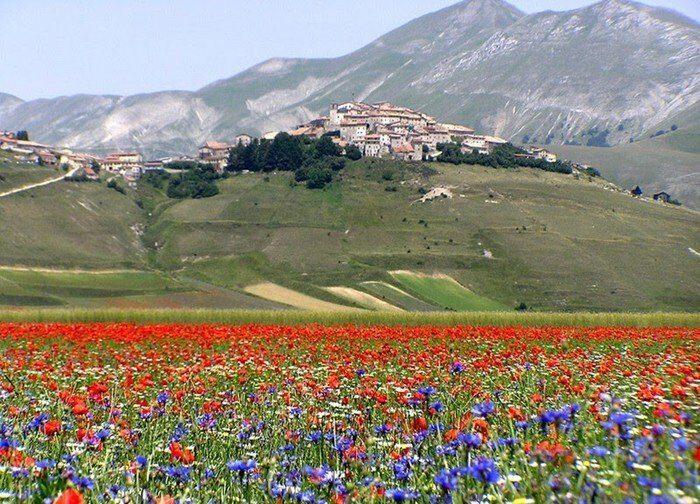 """La """"Fiorita di Castelluccio"""" è tra le buone pratiche agricole europee"""