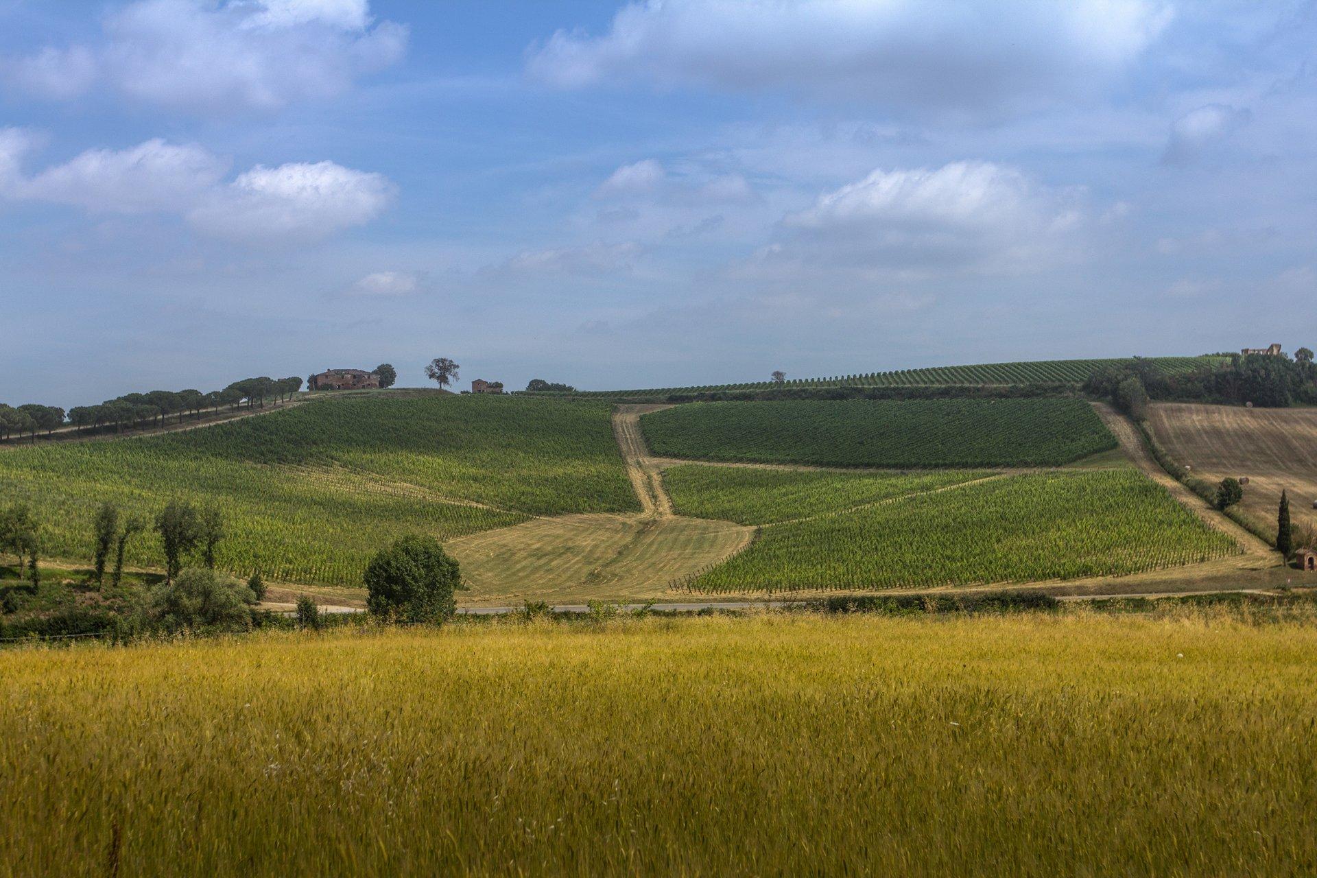 Enovitis in Campo, Montepulciano: quando vino e tecnologia si incontrano