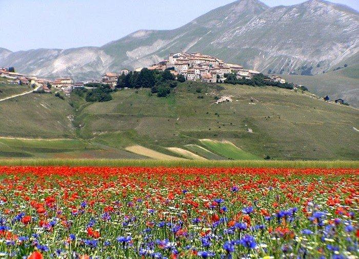 """Un utile chiarimento intorno alla """"fiorita"""" di Castelluccio"""