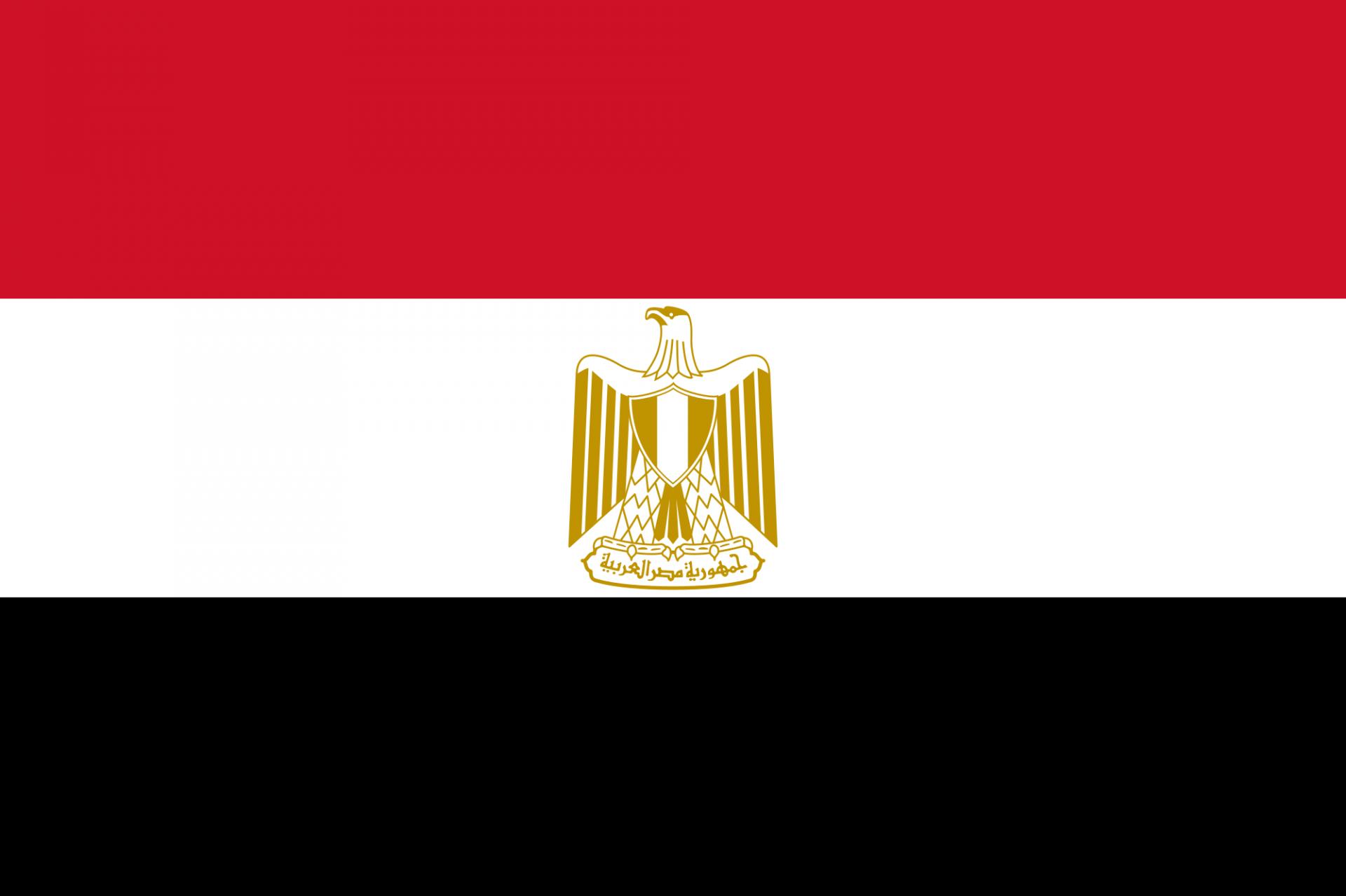 L'olivicoltura in Egitto