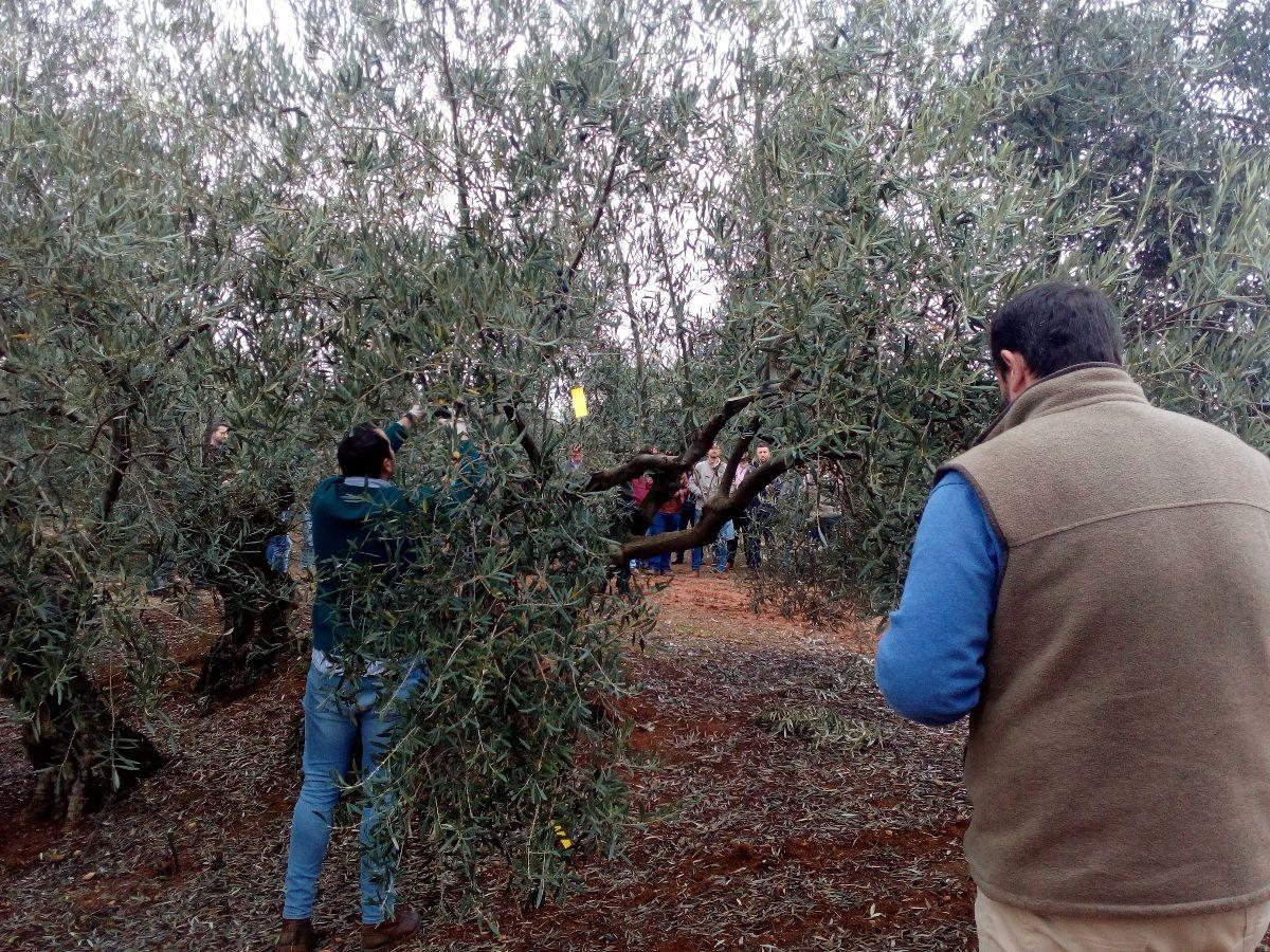 Dcoop avanza en su objetivo hacia un olivar más sostenible reduciendo el uso de fitosanitarios