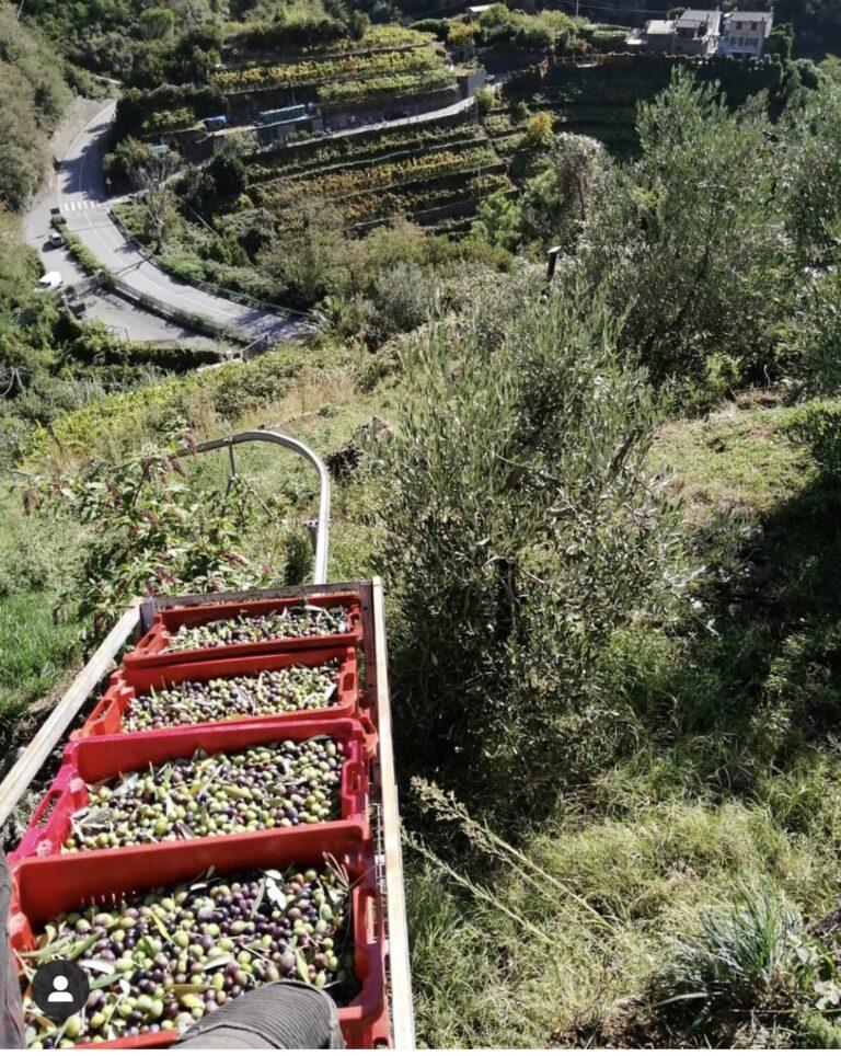 La Lunigiana, Dante, gli olivi, l'olio