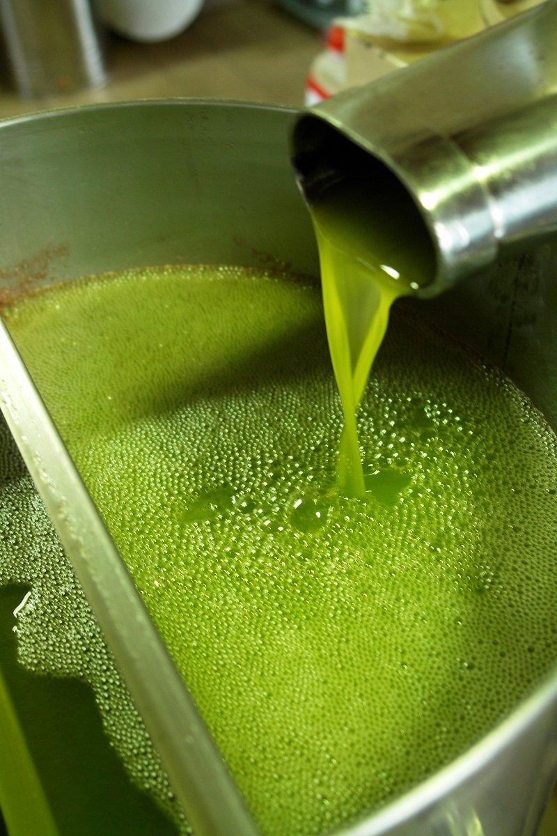 Frantoiani uniti su prezzo delle olive, dichiarazioni in fattura e apertura posticipata degli oleifici