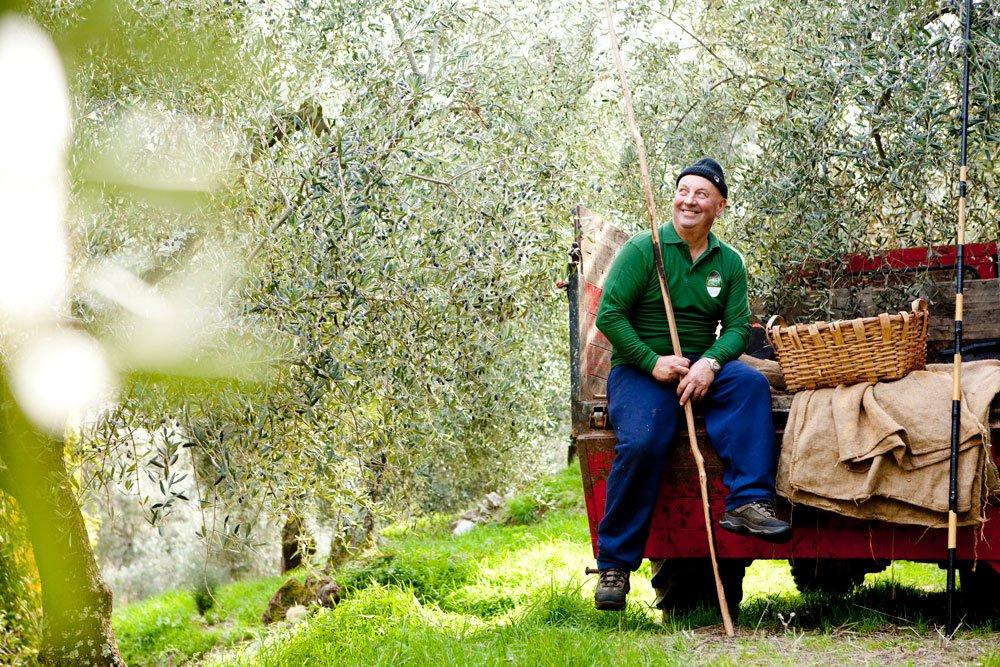 Tutto quel che occorre sapere sulla raccolta delle olive