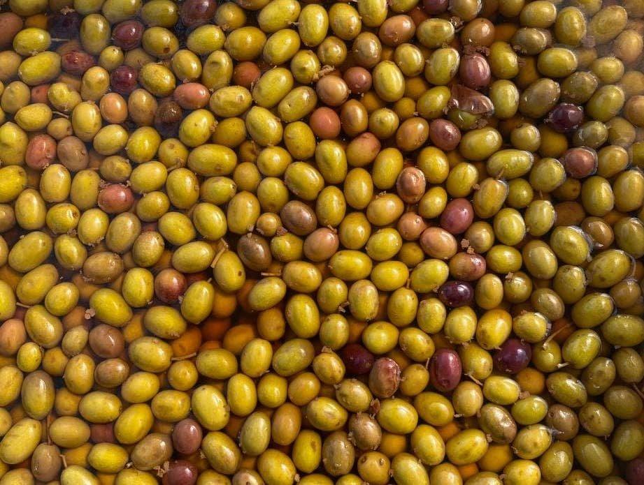 Rivoluzione Taggiasca. Produrre e commercializzare l'oliva in salamoia con soluzioni innovative