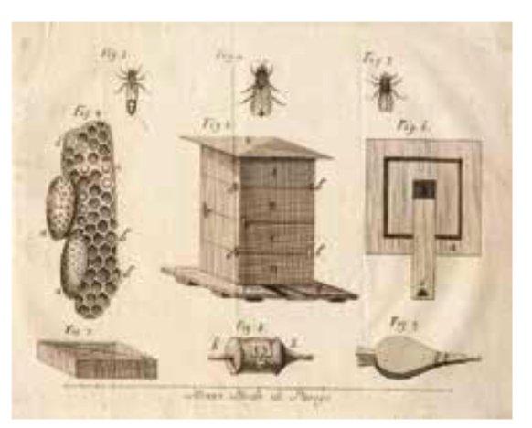 Veneto Agricoltura ha pubblicato, con disponibilità gratuita, un utile libro su api e apicoltura