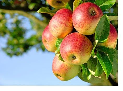 Natura Nuova a sostegno della prevenzione dello spreco alimentare