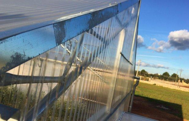 Fronte anti Xylella, si inaugura nel Salento la serra delle resistenze, funzionale alla ricerca di germoplasma di olivo resistente