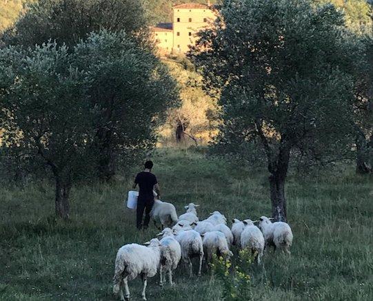 È tempo di Terroir Tuscany