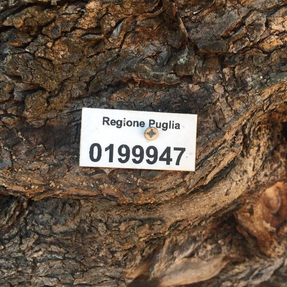 Sono disponibili le linee guida per gli interventi di cura e salvaguardia degli alberi monumentali