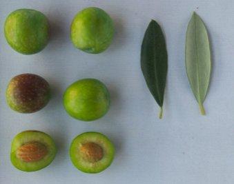 Le nuove olive da tavola