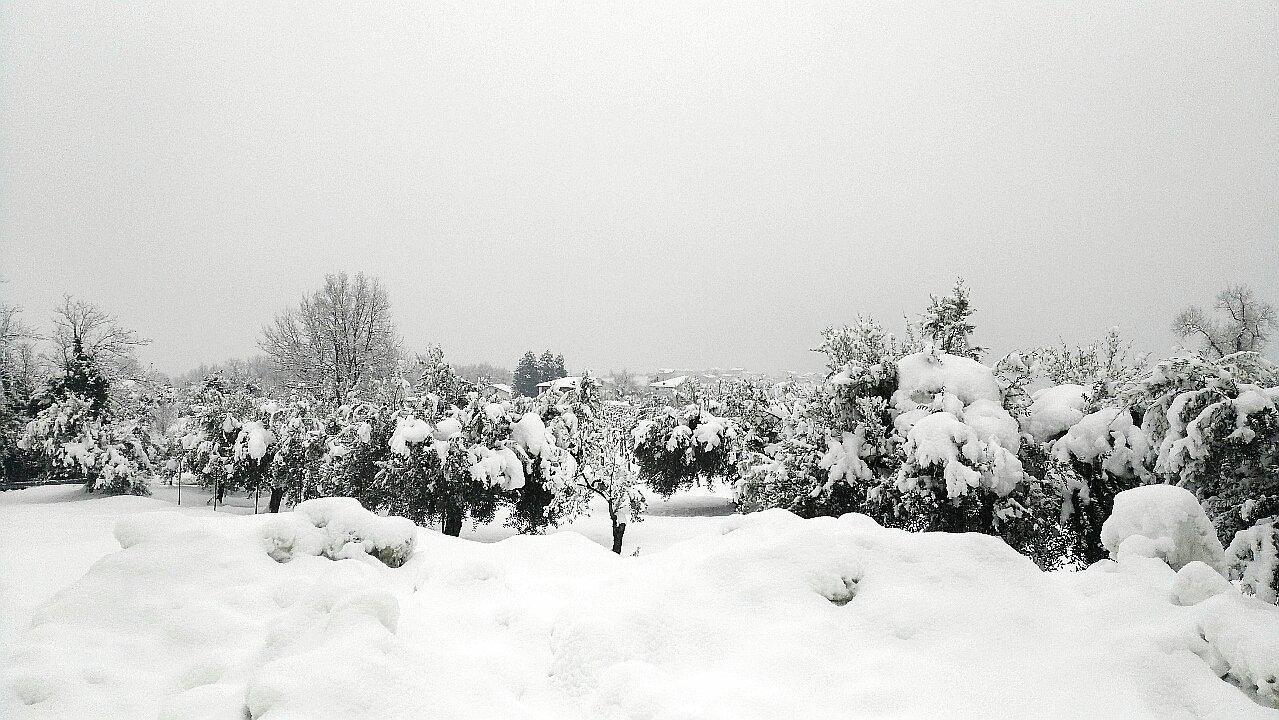 L'Abruzzo, gli olivi, la neve
