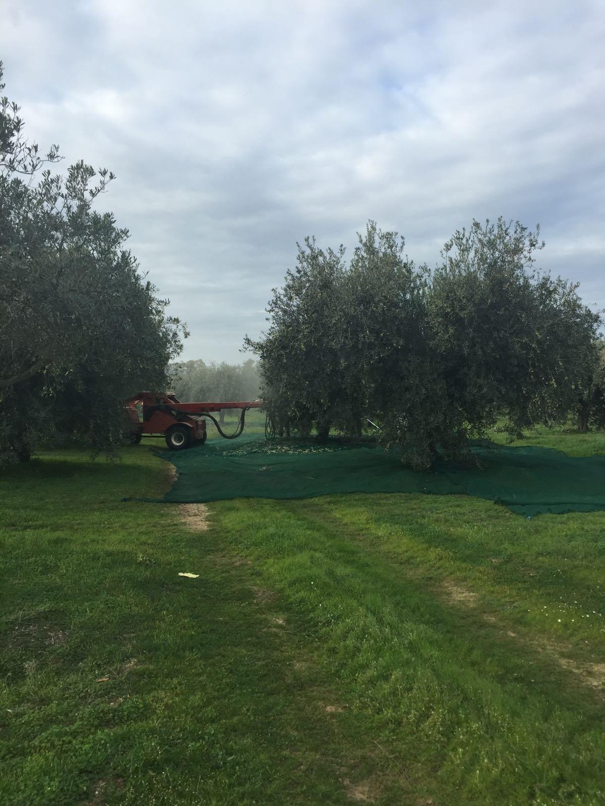Olbia crocevia del vermentino e dell'olio da olive