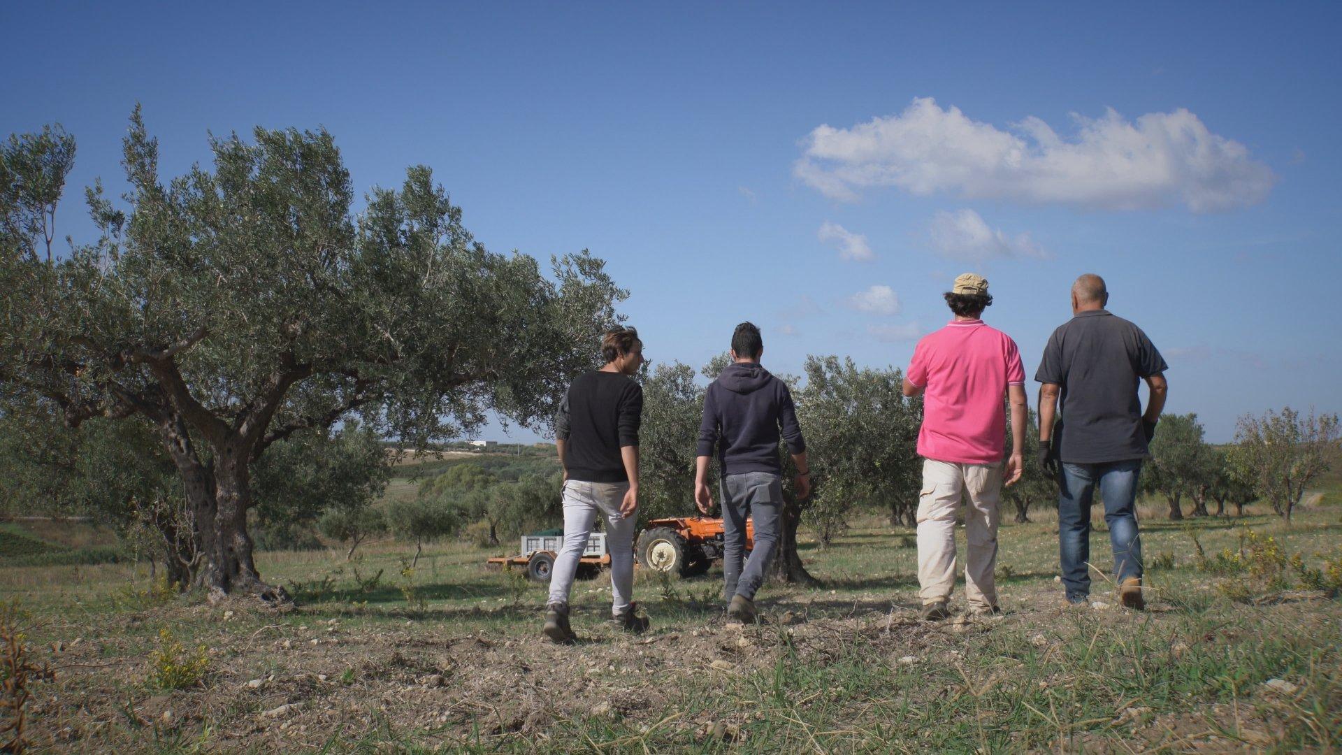 Novolio, a Menfi una due giorni per celebrare l'olio extra vergine di oliva Dop Val di Mazara