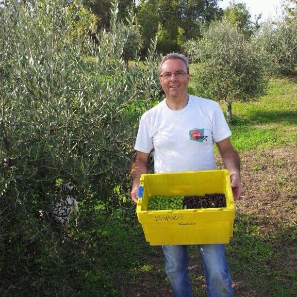 L'olivicoltura a Piacenza c'è. E si fa in tre
