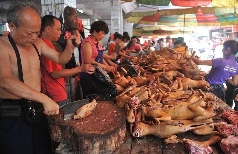 Mangiate carne di cane, fa bene
