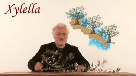 Xylella è natura, l'ulivo è cultura
