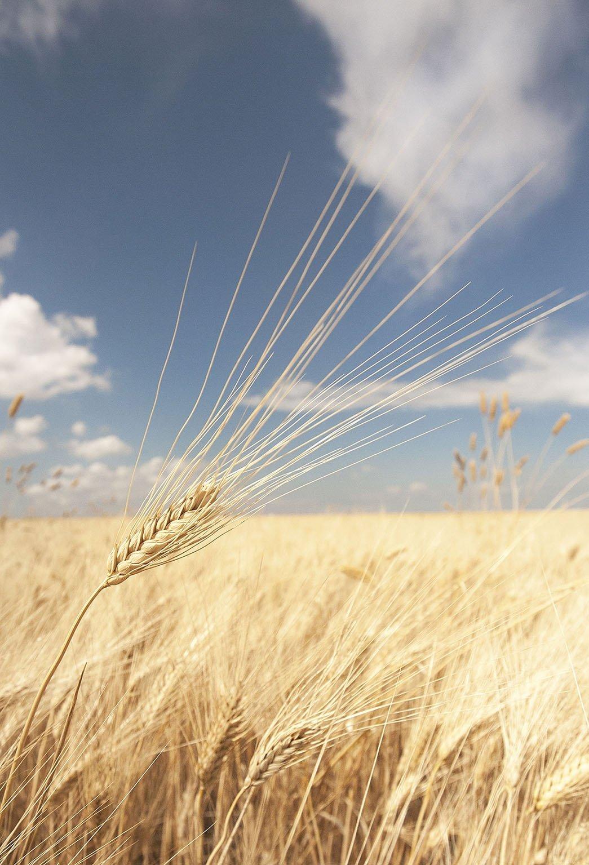 La grande tradizione dei grani