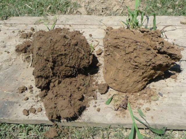 L'agricoltura biodinamica raccontata da un vignaiolo e un ortolano