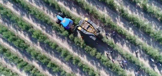 Olio, Cia: risposte immediate e massima priorità all'attuazione Dl emergenze e riforma settore olivicolo e oleario