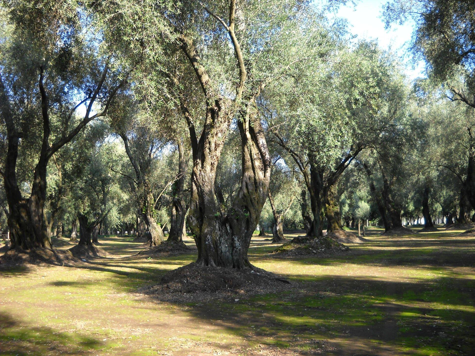 Olio di sansa, i sansifici in appoggio di Agrinsieme Calabria