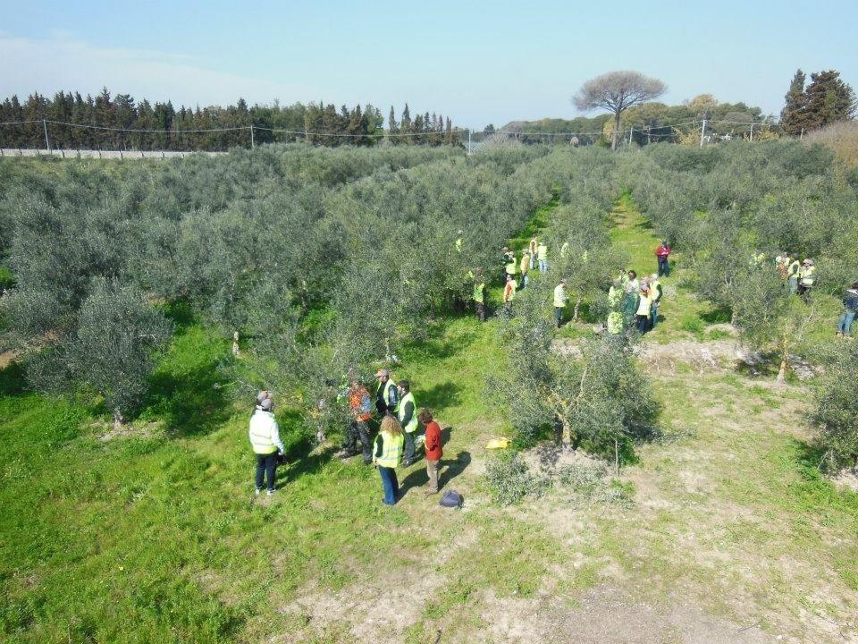 La fotografia dell'Italia olivicola