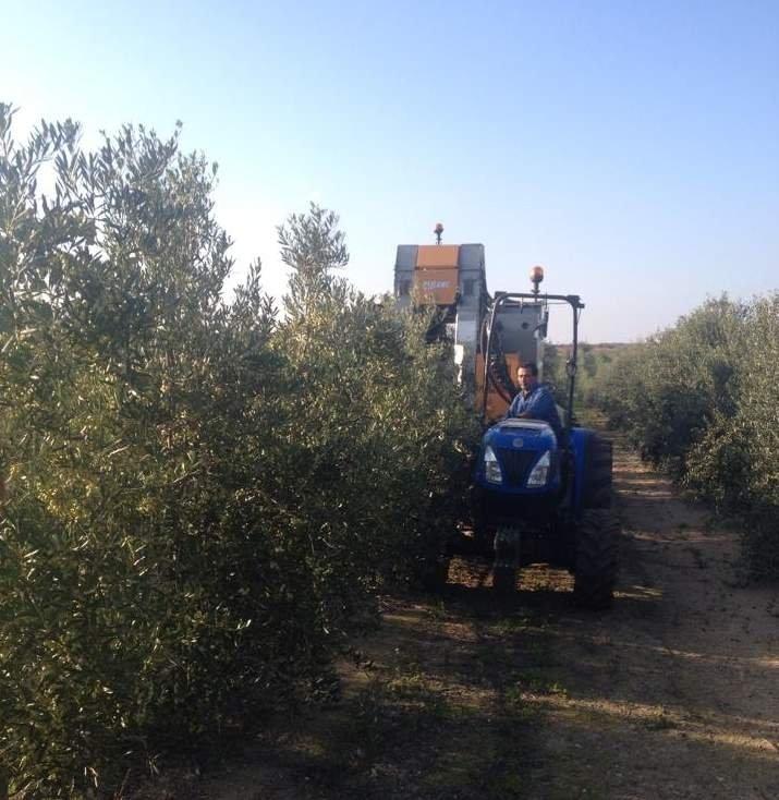 L'olivicoltura che non ti aspetti