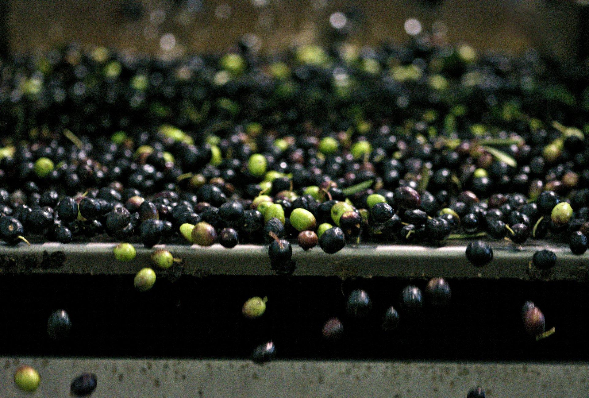 Festa dell'Olio Nuovo a Cavaion Veronese domenica 10 novembre dai Turri