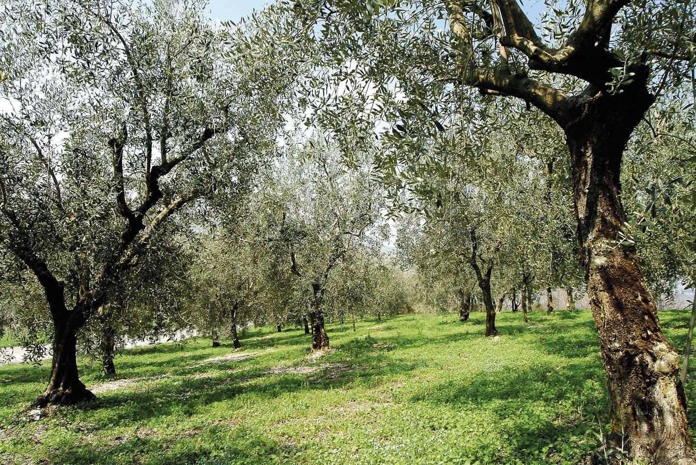 A Palermo olive e oli d'Italia, con dimostrazione di molitura delle olive a freddo per Zagara d'Autunno