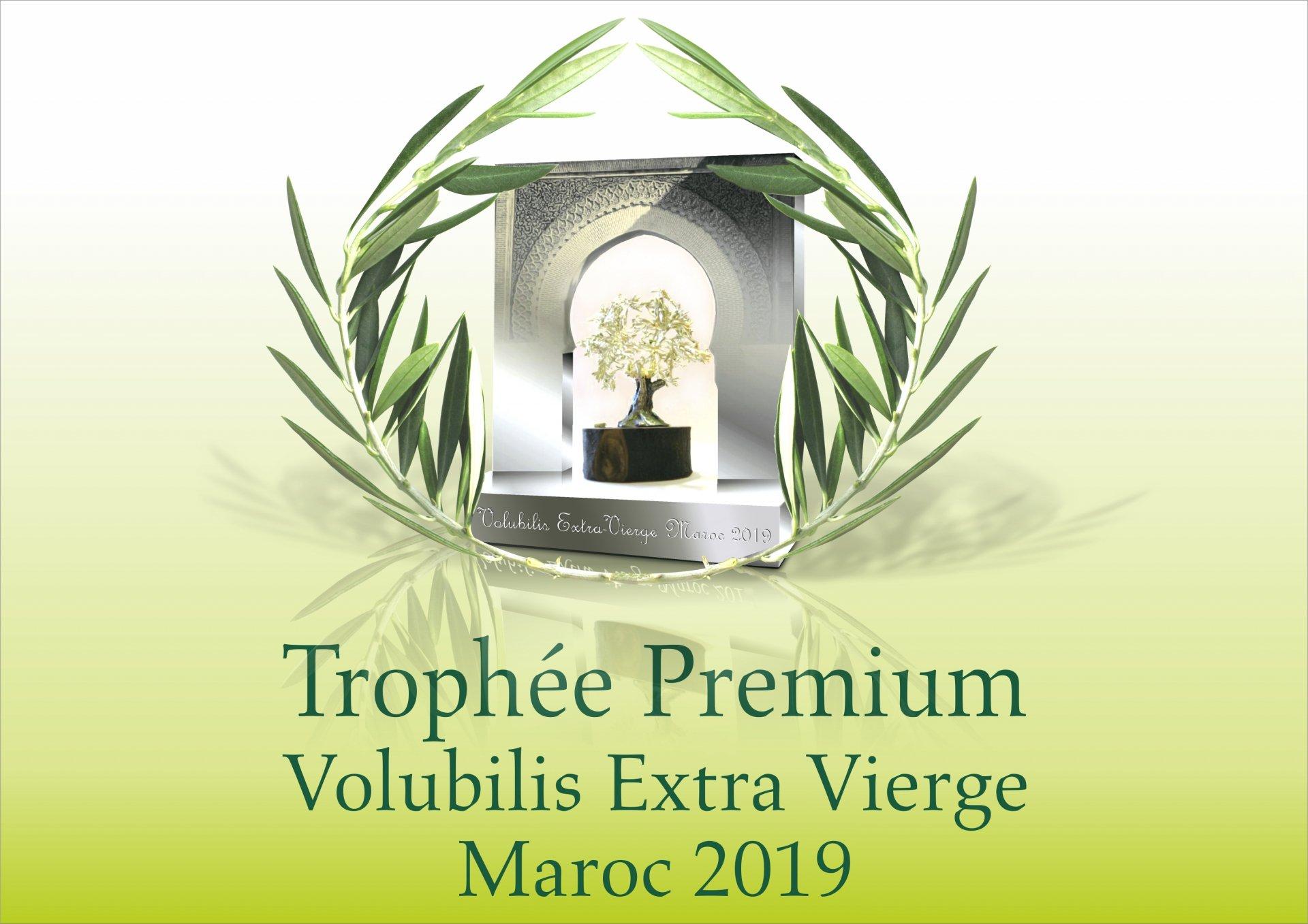Agro-pôle Olivier Meknès: promotion de l'huile olive marocaine de qualité premium