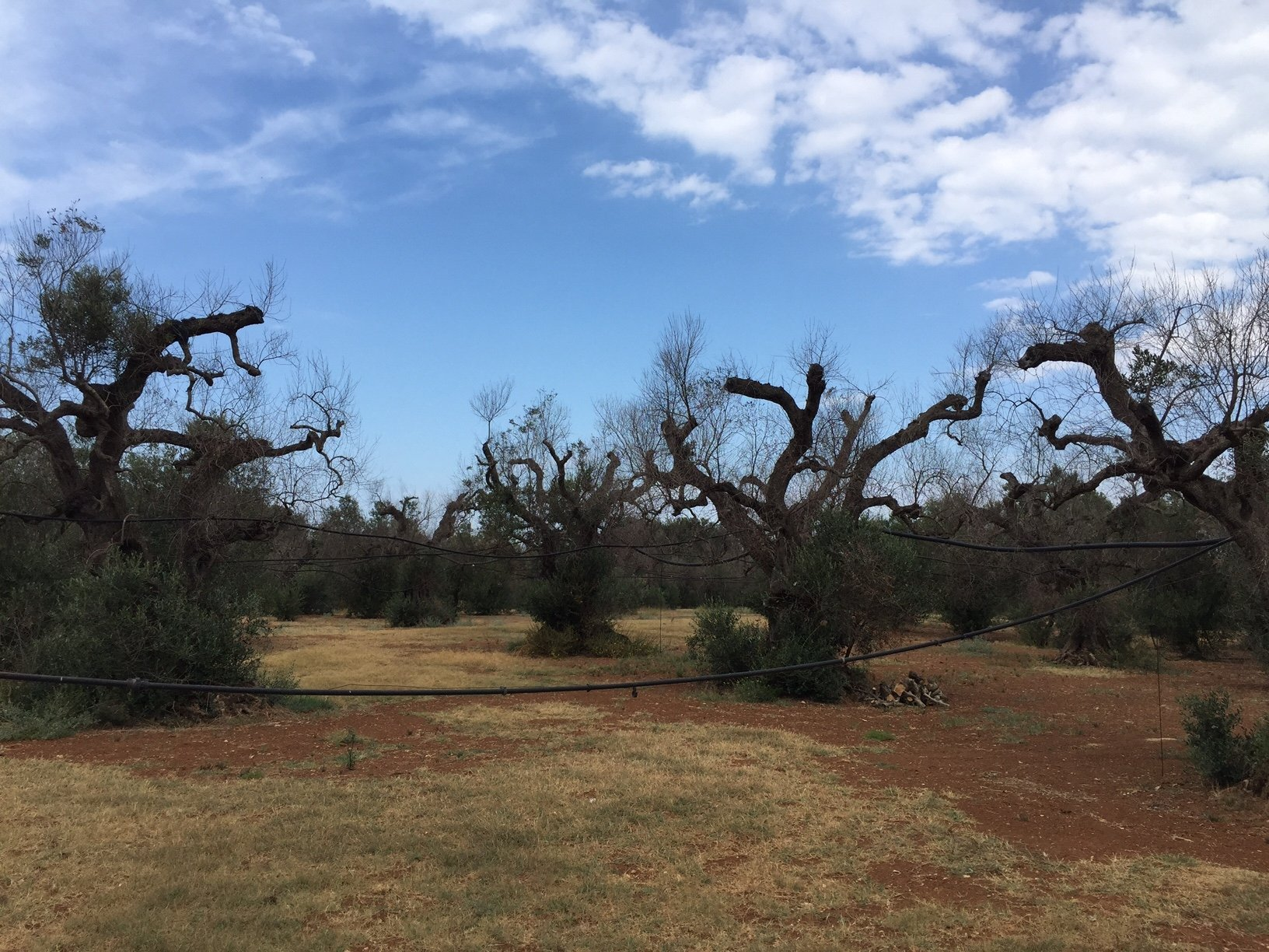 Global conference on the fight against Xylella fastidiosa