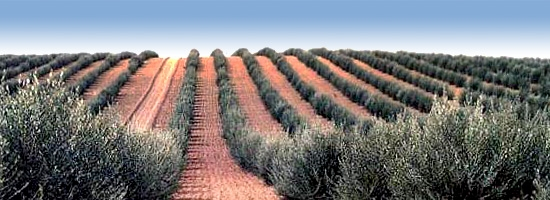 World olive oil balances for the 2016/17 and 2017/18 crop years