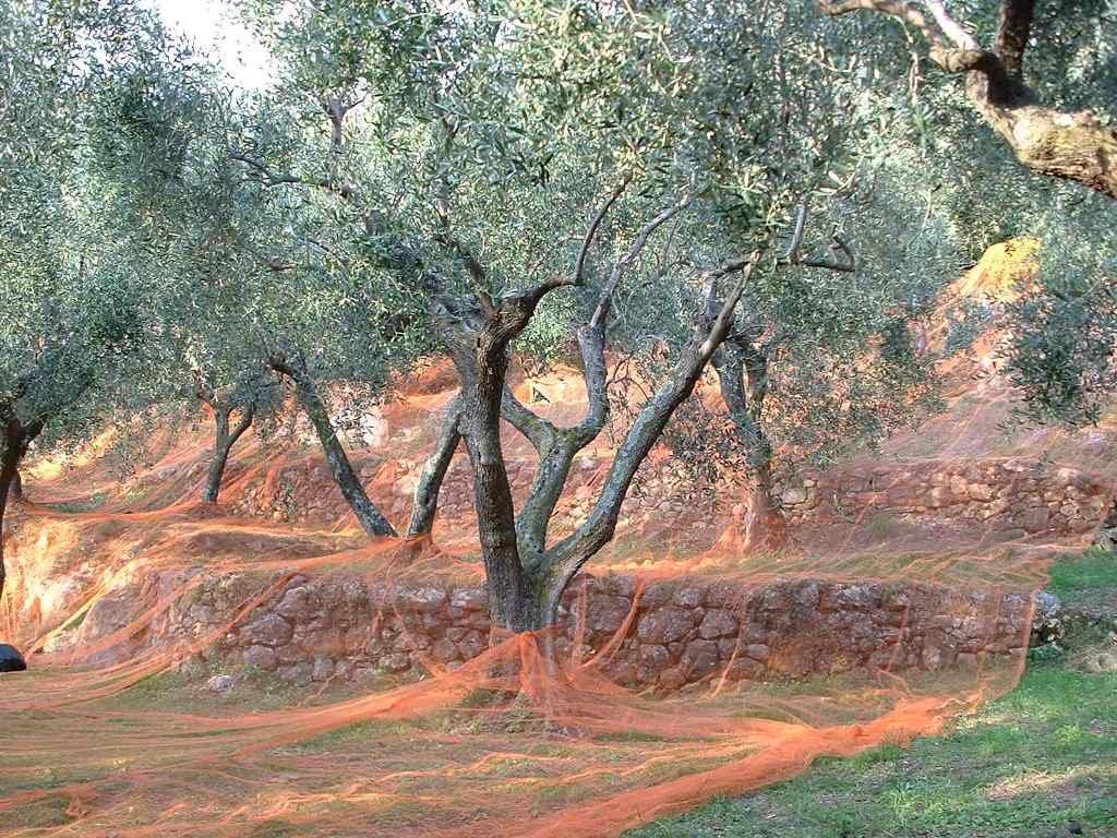 """Olio e poesia, il """"Premio Montale Fuori di Casa"""" a Bartolomeo Smaldone"""