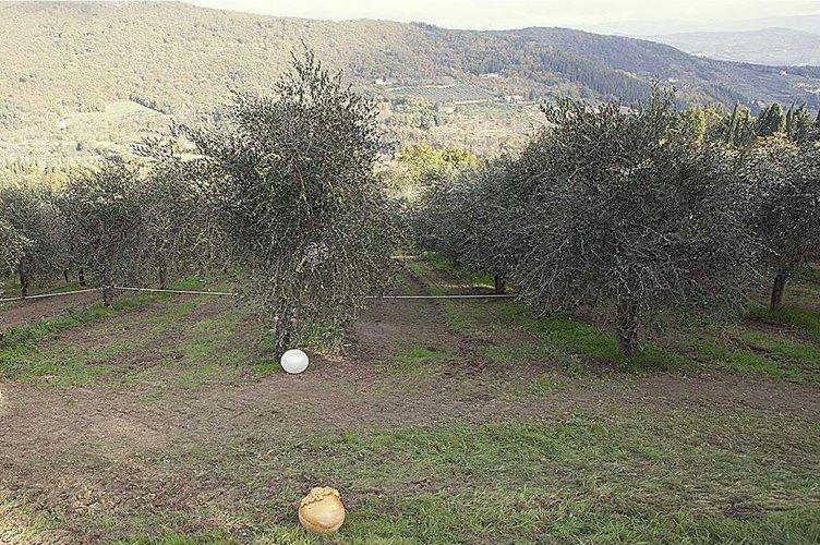 A Fiesole, una camminata d'arte tra gli olivi