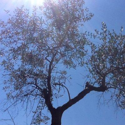 Cielo con olivi e raggio di sole in Umbria