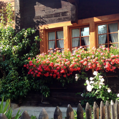 Finestra fiorita a Zermatt